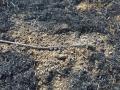 Kabelbrand (7)
