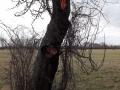 Kleinbrand Baum (1)