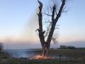 brennt Baum (1)