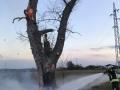 brennt Baum (3)