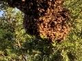 Bienennest Spielplatz (1)